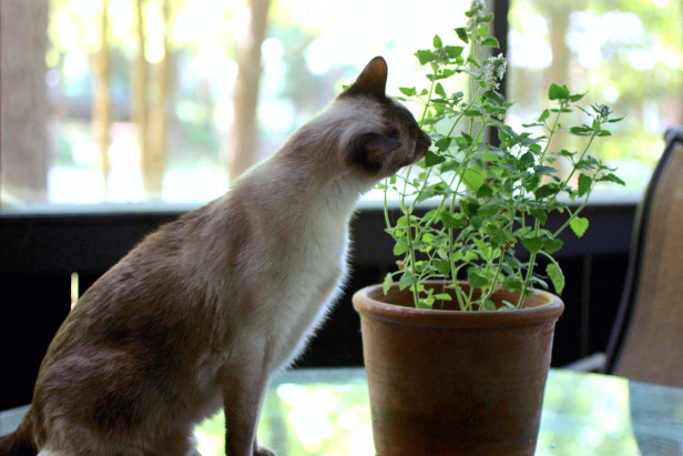7 plants to grow for your cats