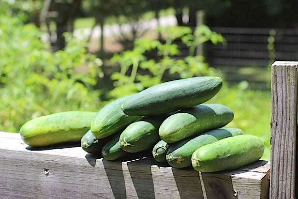 cucumbers0
