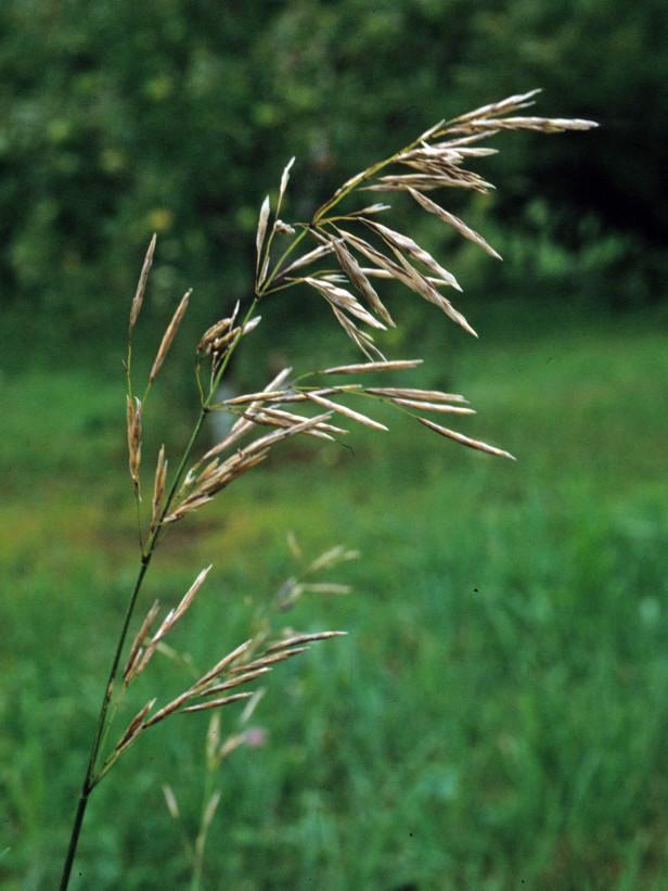 weeds7