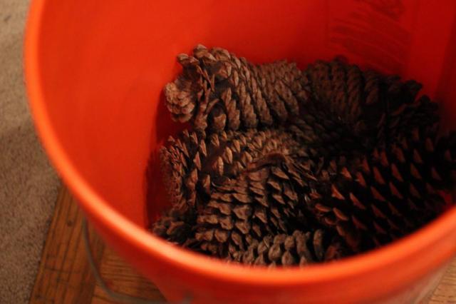 pinecones11