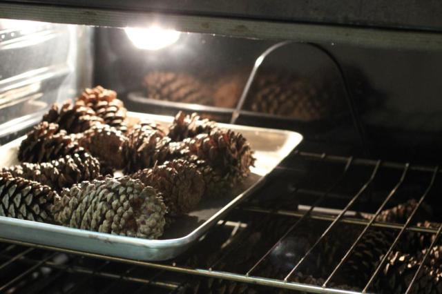 pinecones7