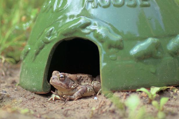 toad house