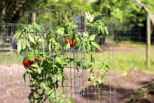 tomato cages 411